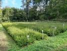 Sadenice, semenáčiky SM, JD
