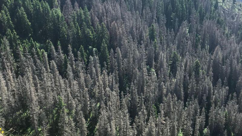 Postreh: Dialóg s ochranármi je síce nevyhnutný, ale niektorí lesomajitelia sú z neho už zúfalí