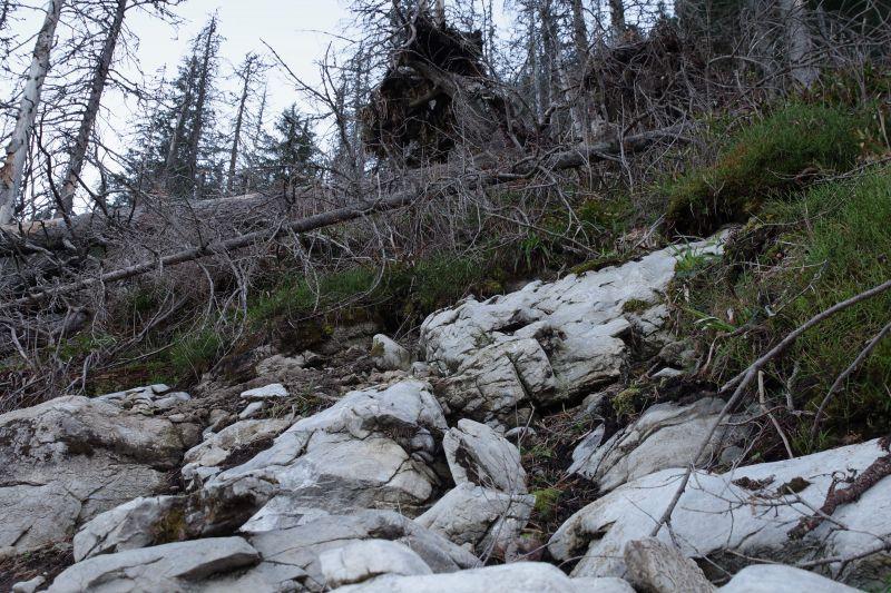 Mýty a fakty o bezzásahovom režime: Ponechať desať percent lesov Slovenska na samovývoj je nezmysel