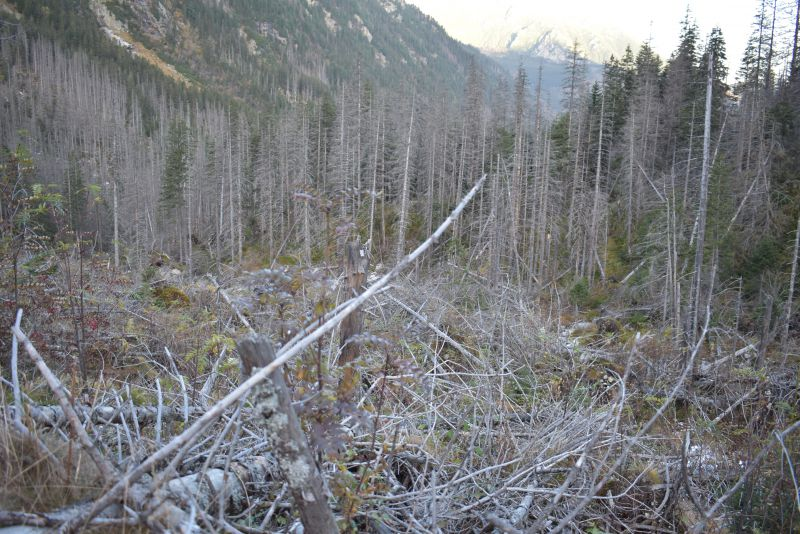 Súkromní vlastníci lesov poprosili prezidentku Čaputovú, aby sa stala pomocníkom zraniteľného vidieckeho obyvateľstva