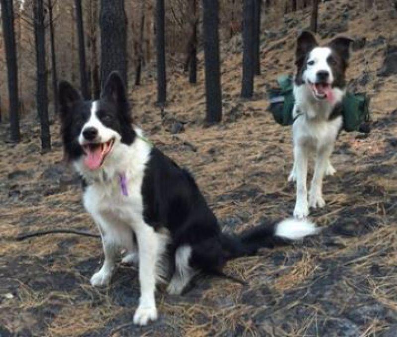Štvornohí pomocníci lesníkov