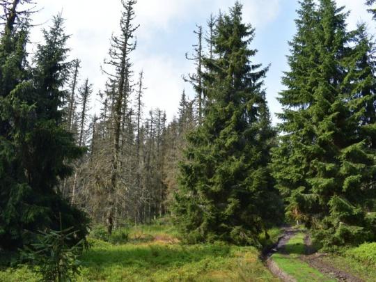 Českí vlastníci lesov: Lykožrút je horší ako koronavírus