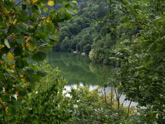 Kauza Pečniansky les nekončí. LESY SR a Petržalka sa odvolali
