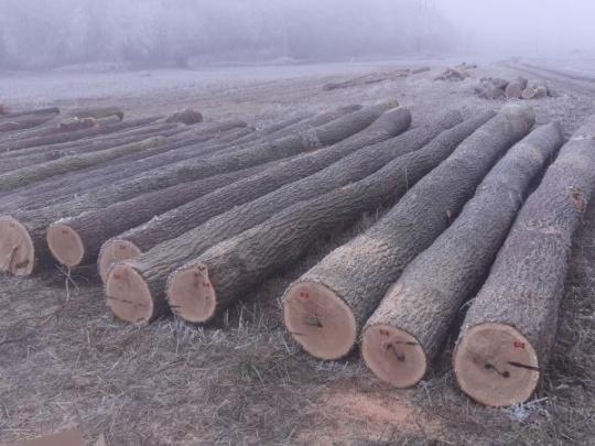 Cirkevní lesníci prvýkrát dražili kvalitnú dubovú hmotu. Úspešne