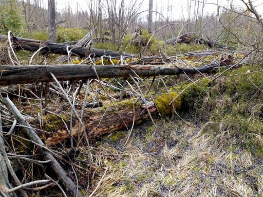 Agrorezort: WWF nechápe, o čom je Zelená správa. Odmietame zavádzanie o mŕtvom dreve