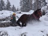 Poznámka: Furmani a kone v lesoch potrebujú finančnú podporu, nie prázdne reči