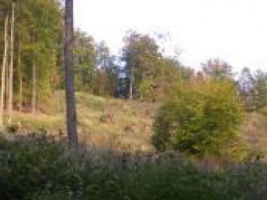 Cesta rozprávkovým lesom