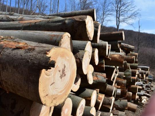 Na ochranu lesa má dozerať ten, čo bude obchodovať s jeho výnosmi? Podľa Z. Simona to neznie ako najlepší nápad