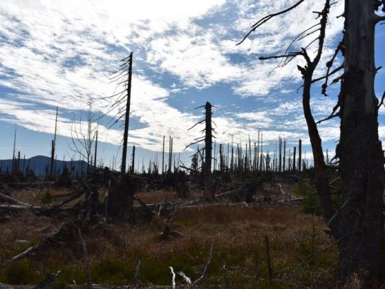 Komentár: Boj o budúcnosť lesov nie je konfliktom ochranárov s lesníkmi, ale s vlastníkmi lesov