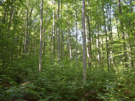 Novela zákona o lesoch podľa agrorezortu reaguje najmä na klimatickú zmenu