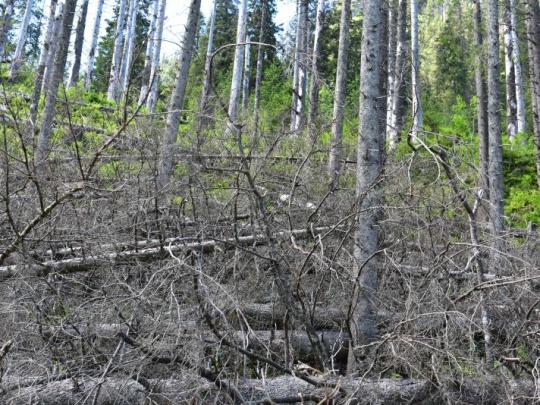 Výzva: Komunikujte o lesníckej práci, inak sa budete pozerať na vyváľané lesy