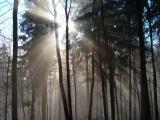 Poznámka: Lesnícke umenie - hra so svetlom