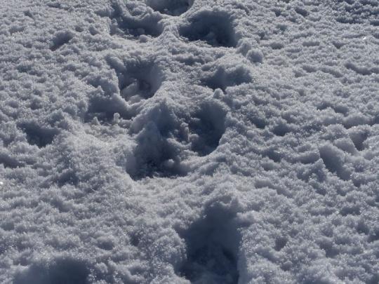 O love vlka rozhodovali niekoľko hodín. Verdikt padne (možno) nabudúce
