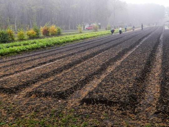 Vojenskí lesníci vypestujú tento rok milión sadeníc, v budúcich rokoch ešte viac – 1,6 milióna ročne