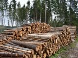 Vo Fínsku postavia najväčšiu továreň na spracovanie dreva na severnej pologuli