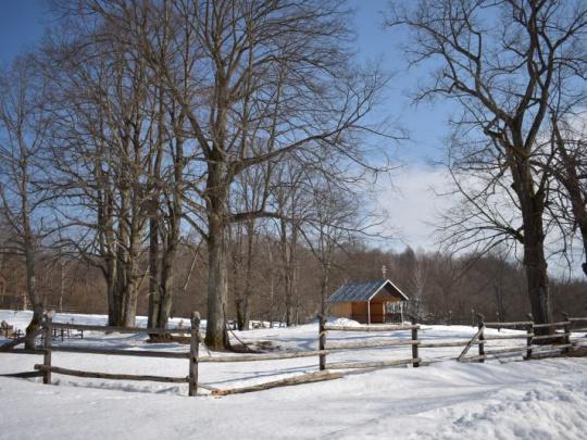 Podľa štátnych lesníkov trvá ochranárom vydanie výnimiek aj niekoľko rokov