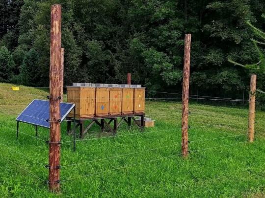 Tatranskí lesníci rozvíjajú včelárstvo. Chovy včiel oplocujú, aby ich ochránili