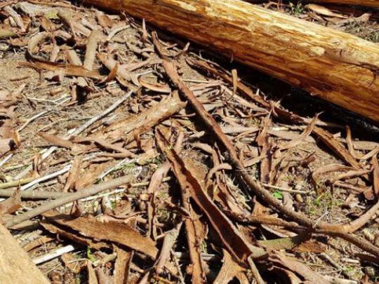Skúsenosť z Nemecka: Lesy zachránime, ak zodpovedne spracujeme kalamity