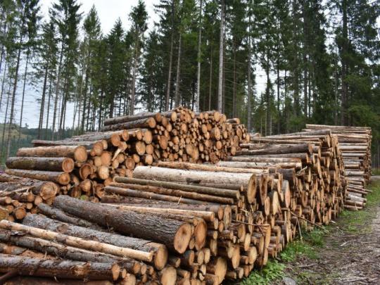 Predaj dreva na Slovensku v minulom roku vzrástol