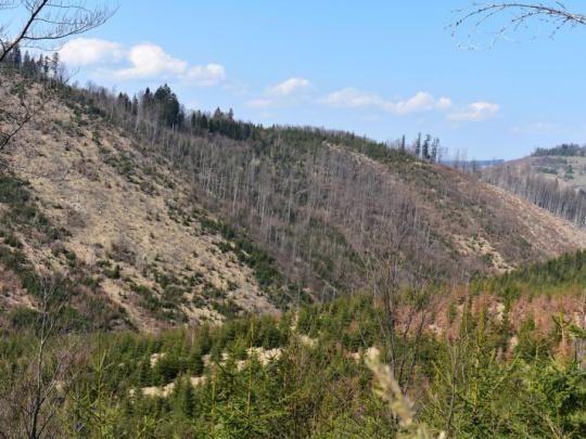 Štátni ochranári sa bránia obvinením lesníkov zo šírenia lykožrútov