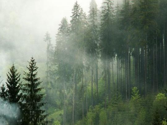 Vzniká plán pre svetové lesy