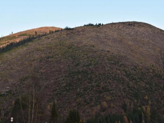 Rebríček škodcov lesa: 1. lykožrút, 2. vietor a 3. sucho