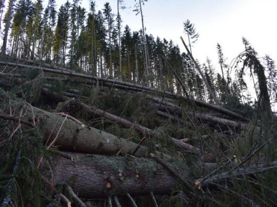 Predseda Fóra o lesoch OSN B. Greguška: Budúcnosť potrebuje lesníkov