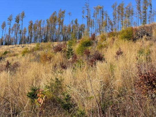 V Európe pozitívny trend: viac nového lesa ako vyťaženého dreva