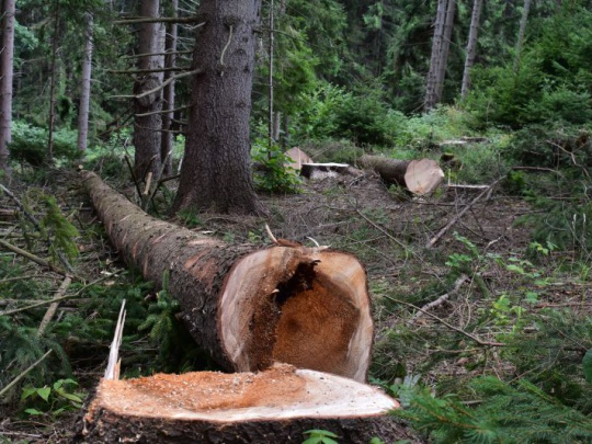 Plánovaný výrub suchých stromov ukážu mestskí lesníci najskôr Bratislavčanom