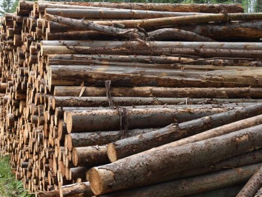 Formálne nedostatky v preprave a zlodejina v ťažbe dreva: to je predsa veľký rozdiel!