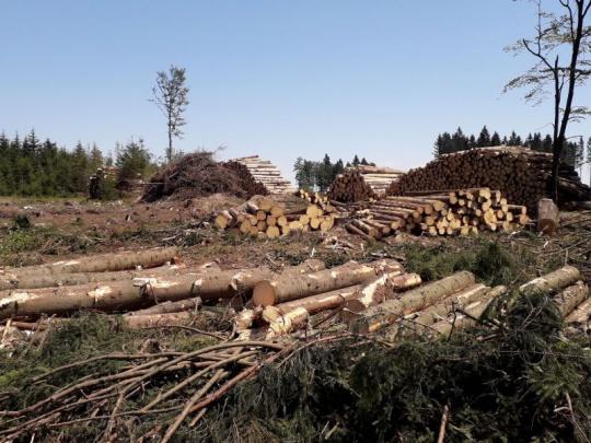 Miliardy pre neštátnych lesomajiteľov v Česku