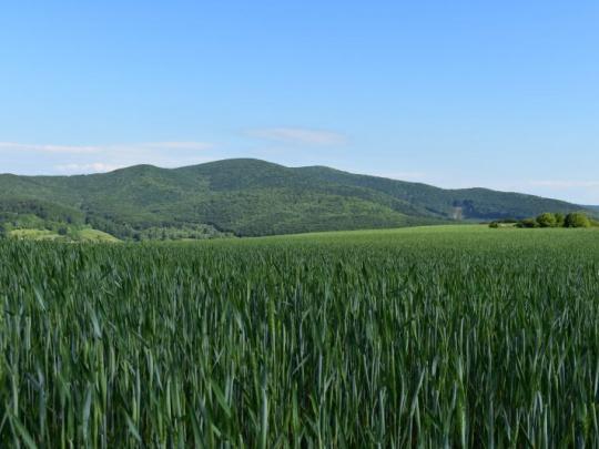 Všimli sme si: Bývalý predseda zboru poradcov ministra zverejnil na blogu závažné informácie o agrorezorte