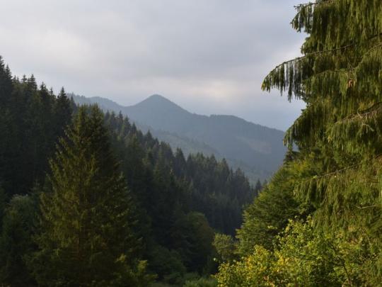 Kontroverzný plán EÚ na zníženie emisií: Lesy a pôda musia byť súčasťou výpočtov