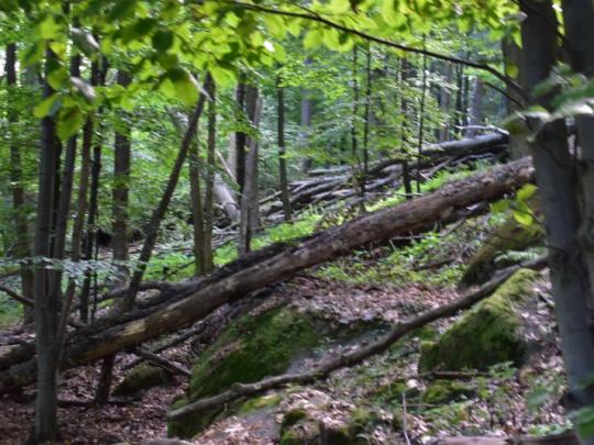 Prírodná rezervácia Pralesy Slovenska: Envirorezort pripravuje návrh do legislatívneho procesu