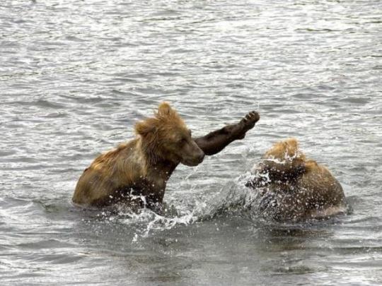 Lonely Planet je nadšený z medveďov vo Vysokých Tatrách, pre miestnych sú problémom