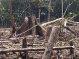 Ťažké časy pre brazílske pralesy