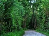 Výmera lesov sa mierne zvýšila