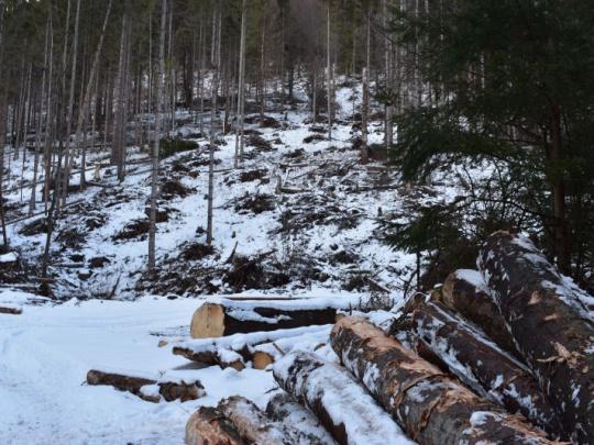 Nová koncepcia štátnej lesníckej politiky do roku 2035 v ČR: rozvoj lesov a podpora ich vlastníkov