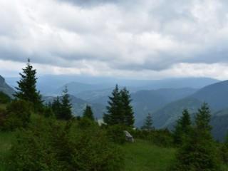 Kauza hlucháň: ŠOP-ka nekomunikuje s lesníkmi a lesomajiteľmi?!