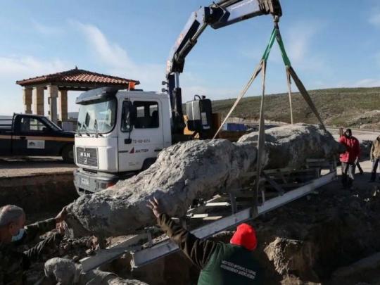 Objav skameneliny stromu, starého približne 20 miliónov rokov
