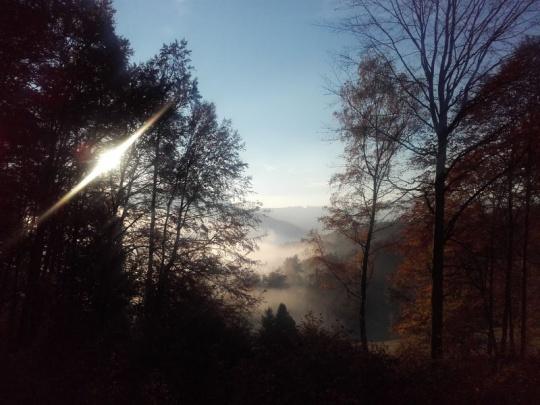 Politické volanie po dialógu medzi lesníkmi a ochranármi