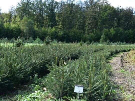 Zalesňovanie poľnohospodársky nevyužívanej pôdy súčasťou nízkouhlíkovej stratégie