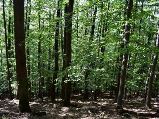 ÚNIA regionálnych združení vlastníkov neštátnych lesov Slovenska reaguje: Slušný štát nezatína finančné sekery!