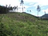 Názor: Kritická situácia lesov a lesníctva na Slovensku. Diagnóza a terapia