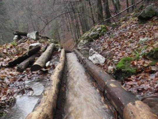 Drevo pustia vodným žľabom