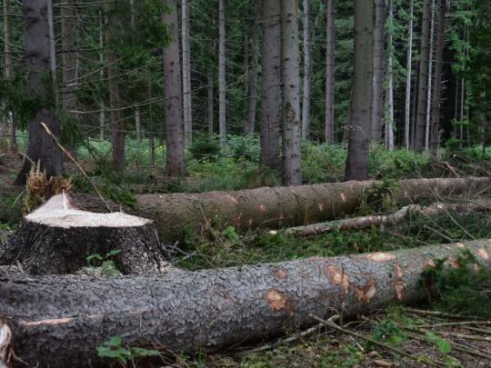 V Rumunsku zabili pri práci dvoch lesníkov