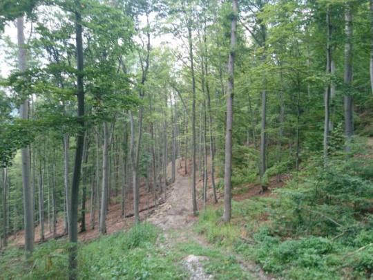 K štyrom lokalitám bukových lesov, zapísaných do zoznamu UNESCO, majú pribudnúť ďalšie dve