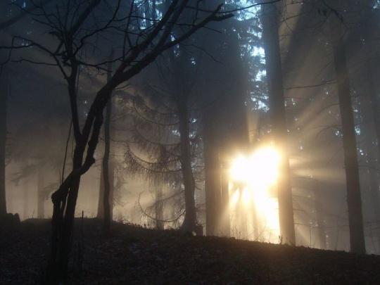 INESS navrhuje sprivatizovať aj štátne lesy