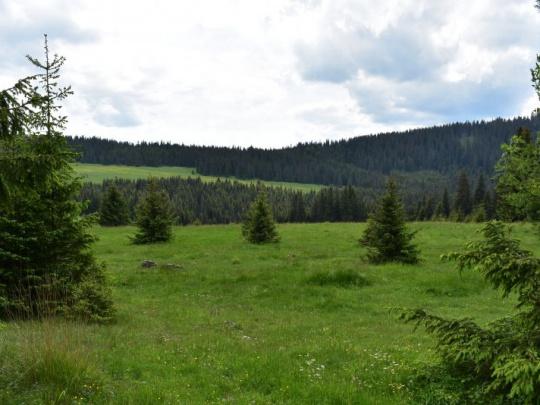 Vlastníci lesov doplnia protestnú nótu pre Európsku komisiu o poznatky o byrokratickej šikane