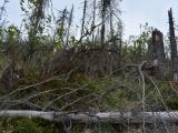 Výzva Slovenskej lesníckej komory: Vyplňujte dotazník k stratégii lesného hospodárstva v EÚ. Bezzásah alebo zdravý rozum